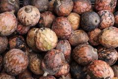 Stock Photo of Custard apple Annona reticulata Reunion France Africa