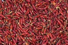 Chili peppers Capsicum annuum dried Myanmar Asia - stock photo