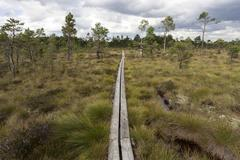 Stock Photo of Boardwalk through moorland raised bog and wetland Store Mosse National Park