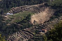 Terrace cultivation field terraces at Nagarkot Nepal Asia - stock photo