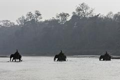 Stock Photo of Mahouts crossing the East Rapti River with their elephants at Sauraha near the