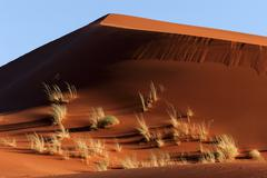 Sand dune covered with tufts of grass evening light Namib Desert Namibia Africa - stock photo