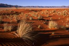 Stock Photo of Southern foothills of the Namib desert sand dunes with tufts of grass behind