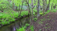 Small river in the forest with fresh green foliage, footage - stock footage