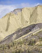 Mountains with Trichocereus pasacana cacti in the foreground near Purmamarca Stock Photos