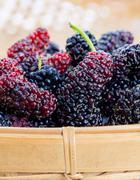 Ripe mulberries macro shot in selective focus. - stock photo