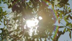 Pan Across Solar Flare Through Branches & Spanish Moss - stock footage