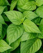 Green leaf with rain drop. Macro shot - stock photo