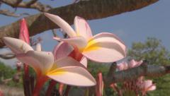 Flowers at the Royal Palace in Phnom Penh, Cambodia Stock Footage