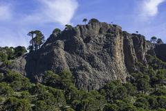 Monkey puzzle trees Araucaria araucana and basalt rocks Neuquen Province Stock Photos