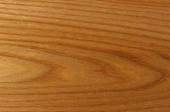 The painting of wood, elmtree. Stock Photos