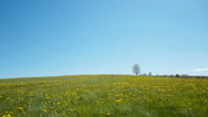 Stock Video Footage of Lonely tree on a meadow against blue sky background