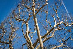 Tracery of leafless branches against a blue sky - stock photo
