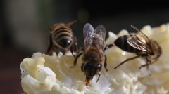 Bees takes nectar and honey with honeycomb cut - stock footage