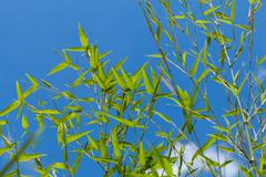 Fresh green leaves against a cloudy blue sky Stock Photos
