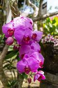 Beautiful exotic Phalaenopsis orchids Stock Photos