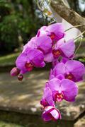 Beautiful exotic Phalaenopsis orchids - stock photo