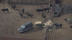 AERIAL Spain-Fighting Bull Ranch Stock Footage