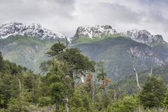 Snow covered mountains and a cold rain forest Carretera Austral Chaiten Los - stock photo