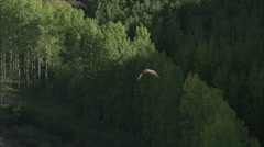AERIAL Spain-Following Vulture To Its Rocky Perch Stock Footage