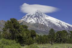 Volcano Lanin and Monkey Puzzle Tree or Chilenian Pine Araucaria araucana Stock Photos