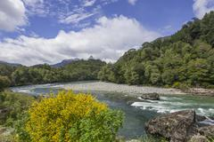 River and flowering gorse Carretera Austral Cisnes Aysen Province Chile South - stock photo