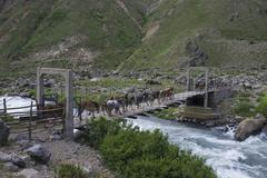 Horses are driven over a suspension bridge Maule Valley San Clemente Maule Stock Photos