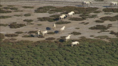 AERIAL France-Camargue Horses Stock Footage