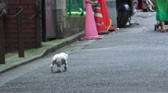 Stray Puppy Walking Alone On City Streets Shinjuku Tokyo Stock Footage