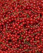 Redcurrant - stock photo