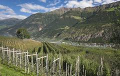 Apple orchards in Vinschgau Latsch Laces South Tyrol Italy Europe Stock Photos