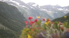 Alpine flowers bloom in summer Stock Footage