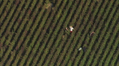 AERIAL France-Grape Picking Inear Mailly-Champagne Stock Footage
