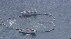 AERIAL Italy-Lobster Farming Stock Footage
