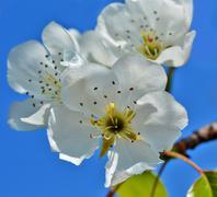 Stock Photo of Spring