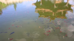 Reflective image of temple and fishes in pond of Yuantong Temple in Kunming Stock Footage