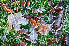 Autumn leaves frost on autumn leaves maple linden oak North RhineWestphalia Kuvituskuvat