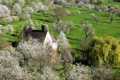 Stock Photo of Cherry blossom Berghauser Matten Berghaus Chapel Ebringen Markgraflerland