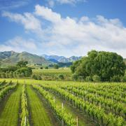 Vineyard tucked up under the mountains in the wine growing Marlborough Region Stock Photos