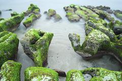 Green seaweed on rocky seacoast Laomei New Taipei Taiwan Asia Stock Photos
