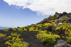 Volcano landschaft lava landscape south cape of Punta de Fuencaliente Monumento Stock Photos