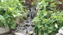 Small creek in tropical garden Stock Footage