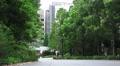 Trees On Pathway Shinjuku Tokyo Japan 4k or 4k+ Resolution