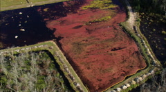 AERIAL United States-Cranberry Picking - stock footage