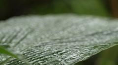 Macro shot of raindrops on a green banana leaf #2 Stock Footage