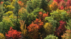 AERIAL United States-Low Over Woods In The Fall Stock Footage