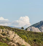 Solitary tree on a hill against clouds Corsica France Europe Stock Photos