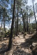 Hiking trail in pine forest Alta Rocca Corsica France Europe - stock photo