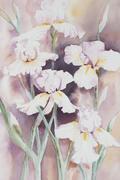White Irises. Stock Illustration