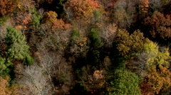AERIAL United States-Close To Trees In Fall Colours Stock Footage